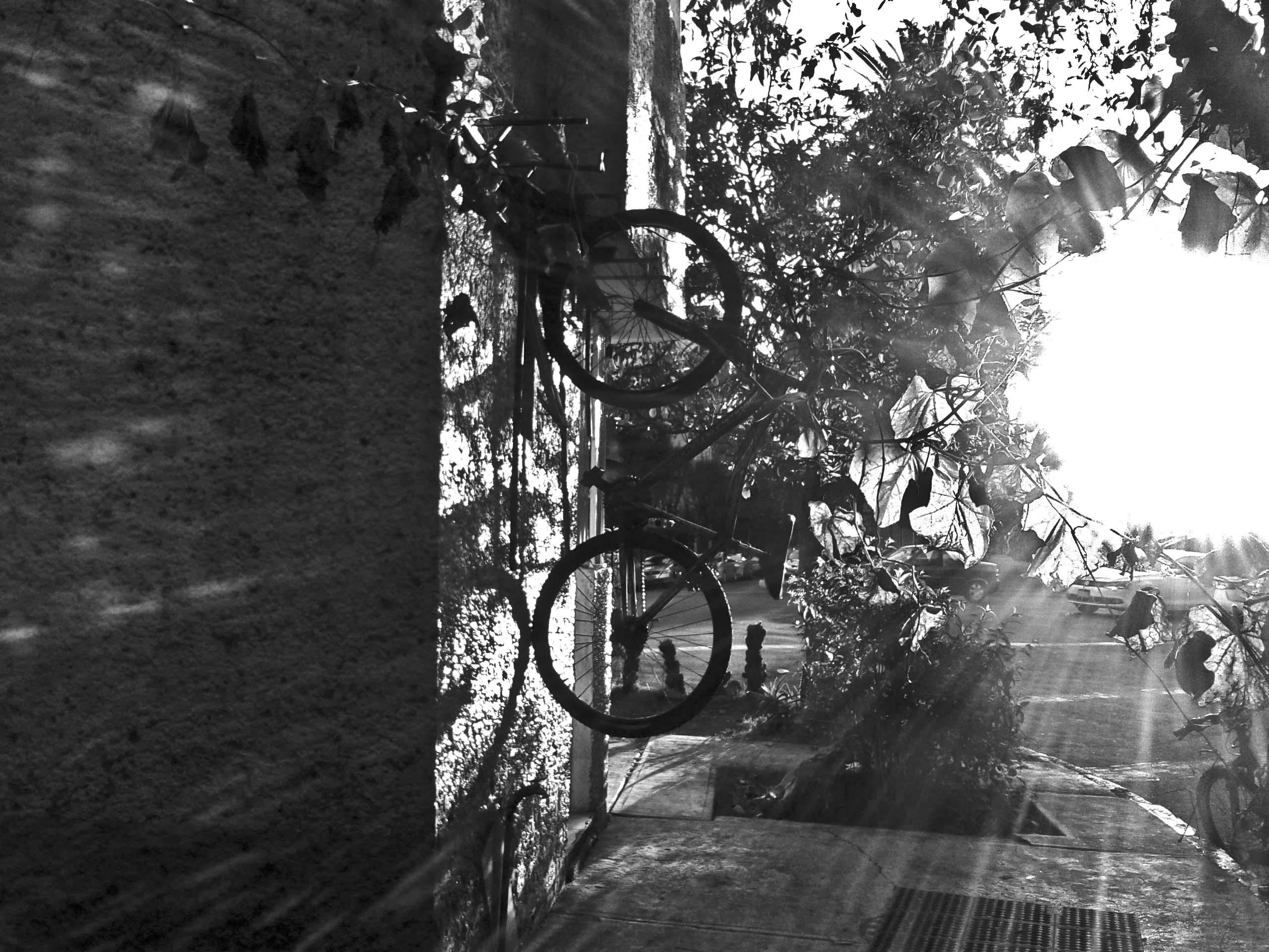 Además de mejorar la circulación, el uso de la bicicleta no contamina, te ejercita y sobre todo te da