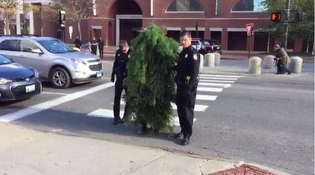 米メイン州で木に仮装して道路をふさいだ男が逮捕される!