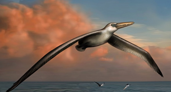 Fossils found at Charleston Airport could be biggest flying bird that ever lived