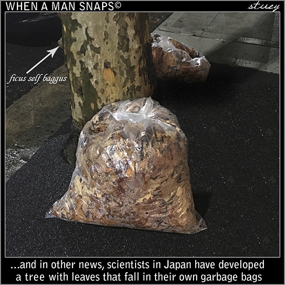 Scientists In Japan Have Discovered A Tree With Leaves That Fall Into Their Own Garbage