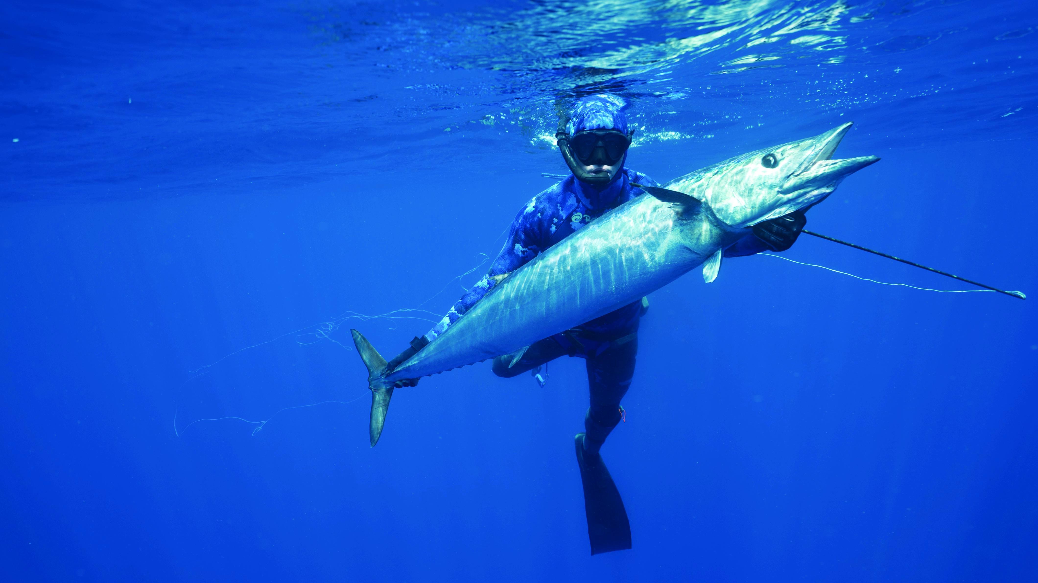 Shark v Tuna