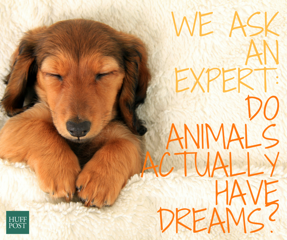 We Ask An Expert: Do Animals Actually Have