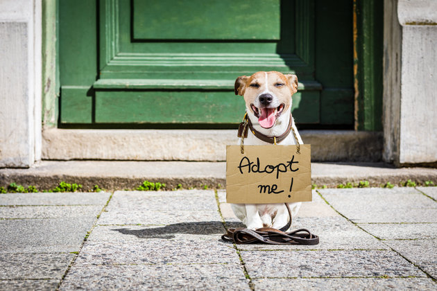 lost and homeless jack russell dog with cardboard hanging around neck, abandoned at the street, waiting...
