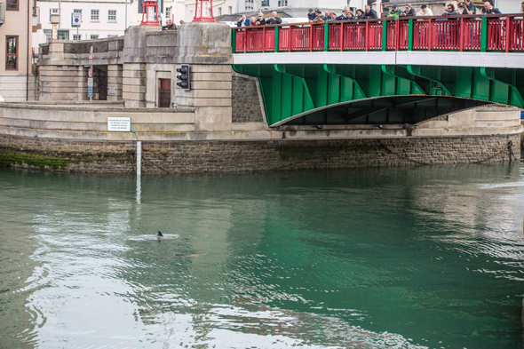 Mandatory Credit: Photo by Dorset Media/REX Shutterstock (4710830d) Dolphins in Weymouth Harbour, Dorset Dolphins in Weymouth Harbour, Dorset, Britain - 25 Apr 2015