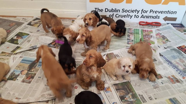 59 smuggled puppies found at Dublin Port