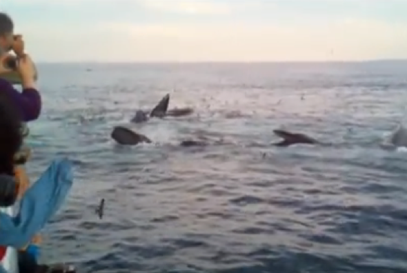Woman screams excitedly while whale watching, video goes viral