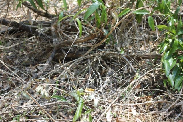 spot the snake