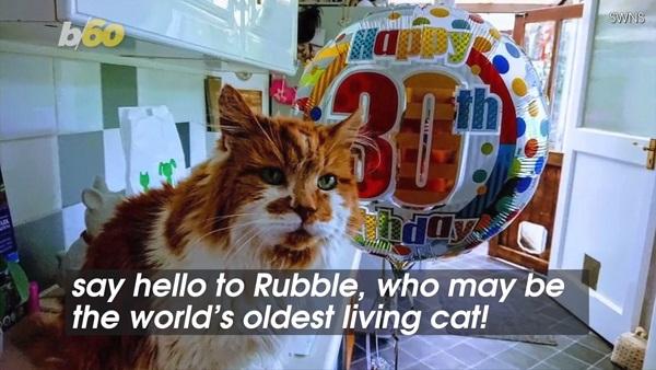 世界一長生きしている猫、ラブルが30歳の誕生日をお祝い