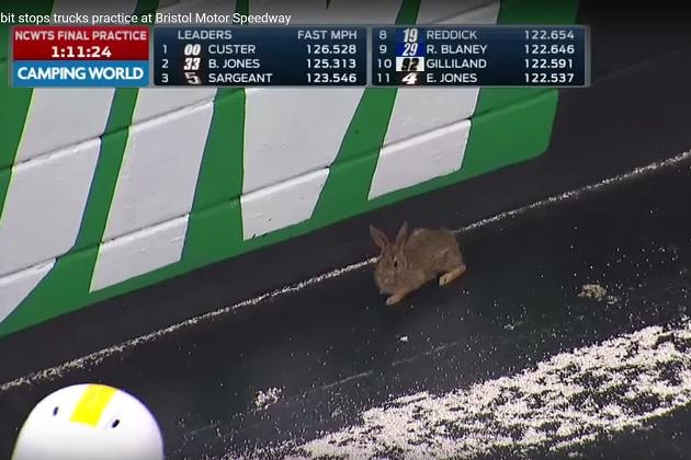 【ビデオ】NASCARの練習走行に珍客乱入! スタッフの捕獲を見事にかわす1匹のウサギ