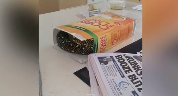 Man find 7ft snake in his cereal box (video)