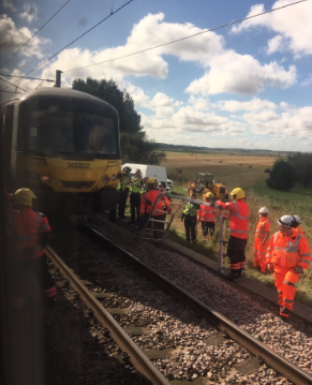 Eleven cows killed after being hit by train in Peterborough