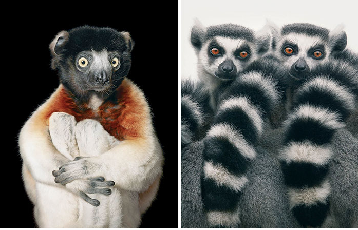 Slideshow: Photographers Spends 2 Years Taking Photos Of Animals Near