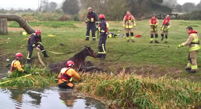Firefighters rescue horse trapped in muddy riverbank