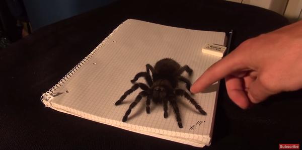 本物だと思ったら絵だった巨大蜘蛛のイラストがコワすぎる動画