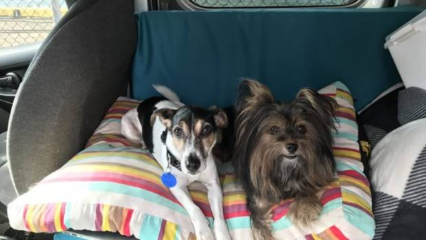TJ, a 10-year-old fox terrier and Bella, a six-year-old pomeranian-silkyare looking for a loving