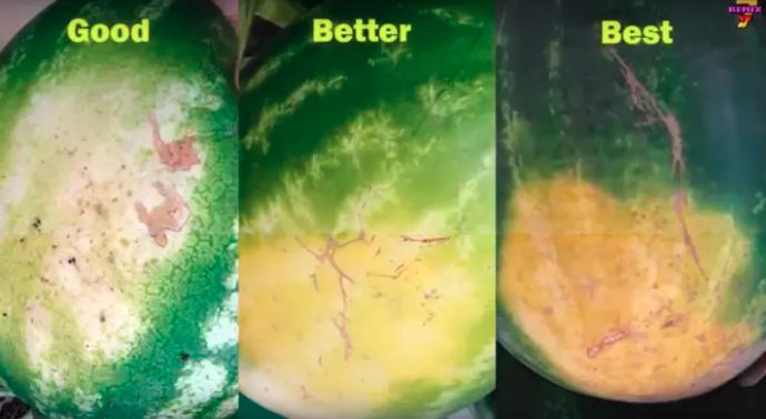 Savez-vous vraiment comment choisir votre melon