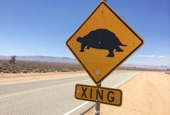Kia's tortoise crossing