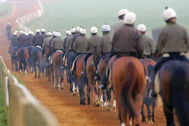Newmarket racing horses