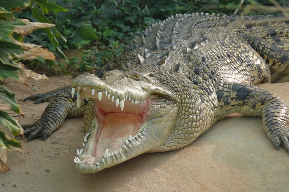 Boy killed by crocodile in Zambia