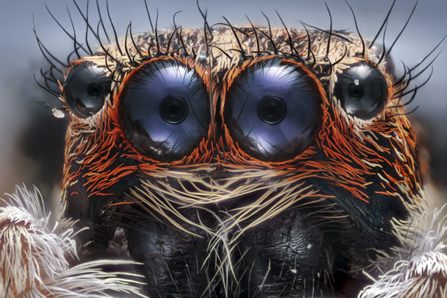 These Seven Award-Winning Microscope Pics Are
