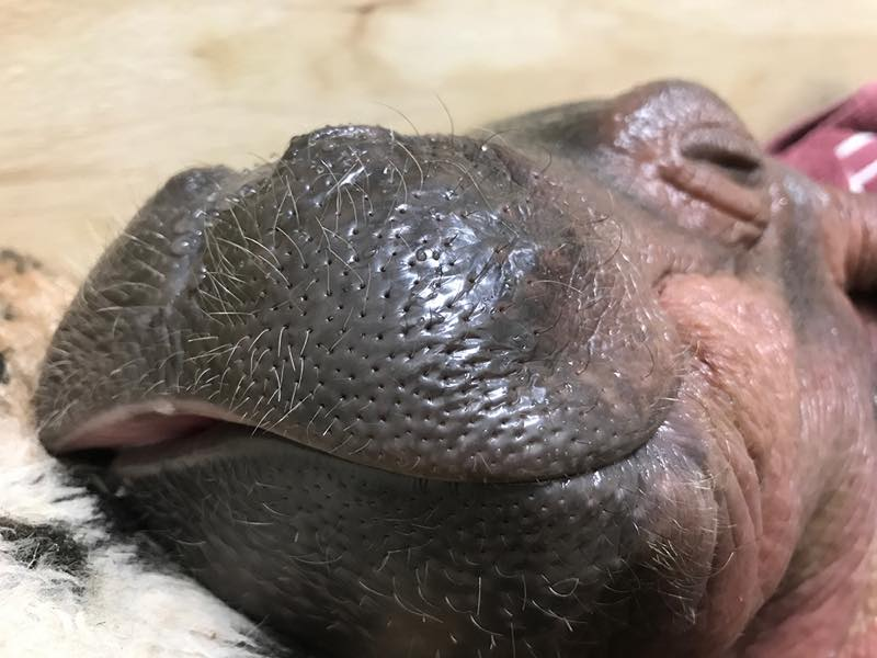 Who's the cutest hippo? You are
