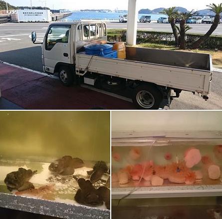 「深海生物を八景島シーパラダイスに寄贈したら大量死」の投稿 ⇒
