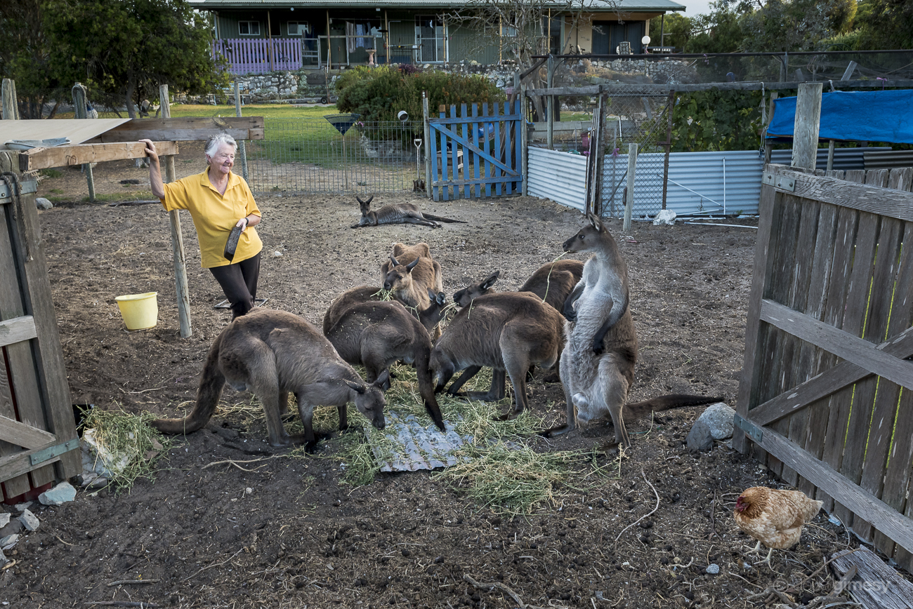 Sandy has cared for injured and orphaned joeys for over 20