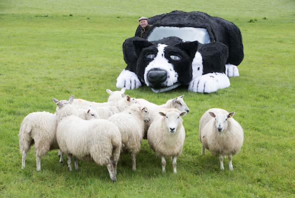 Sheepdog car