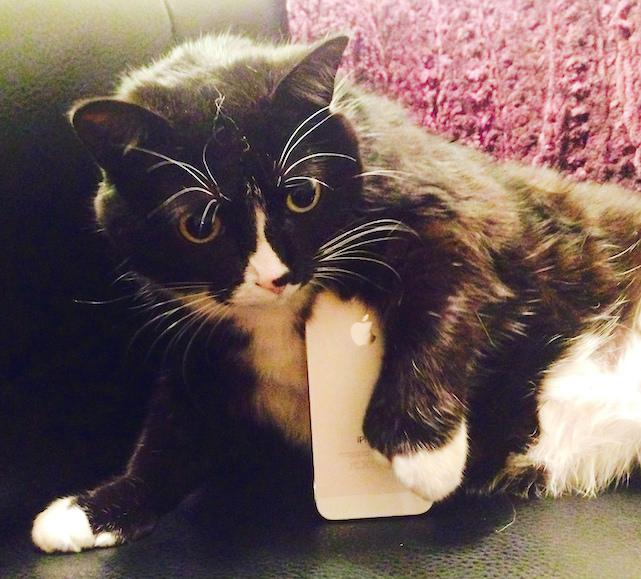 Jezebel (cat) and iPhone. Via Flicker (https://www.flickr.com/photos/circlesixdesign/)