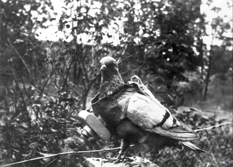 ZentralbildBrieftaubenfotografie, Fotografie mit Hilfe eines kleinen fotografischen Apparates, der an einem der Taube umgeh�ngtem Brustschild befestigt wird.Der Verschlu� des Apparates l��t sich so einstellen, das die Aufnahmen w�hrend des Fluges zu vorher bestimmten Zeiten erfolgen.