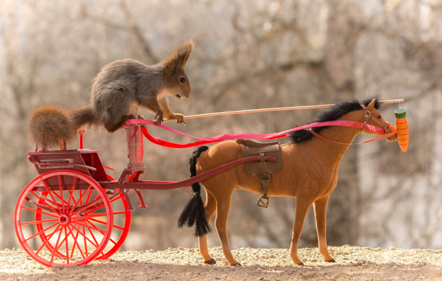 Squirrel takes horse and carriage for a ride