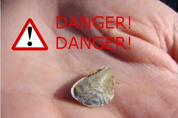 quagga mussels found in uk