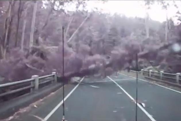 【ビデオ】オーストラリアの車載カメラがとらえた木の