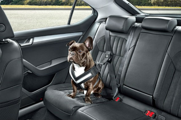 Skoda dog seatbelt