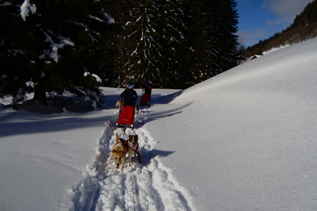 dog sledding in La Plagne for children