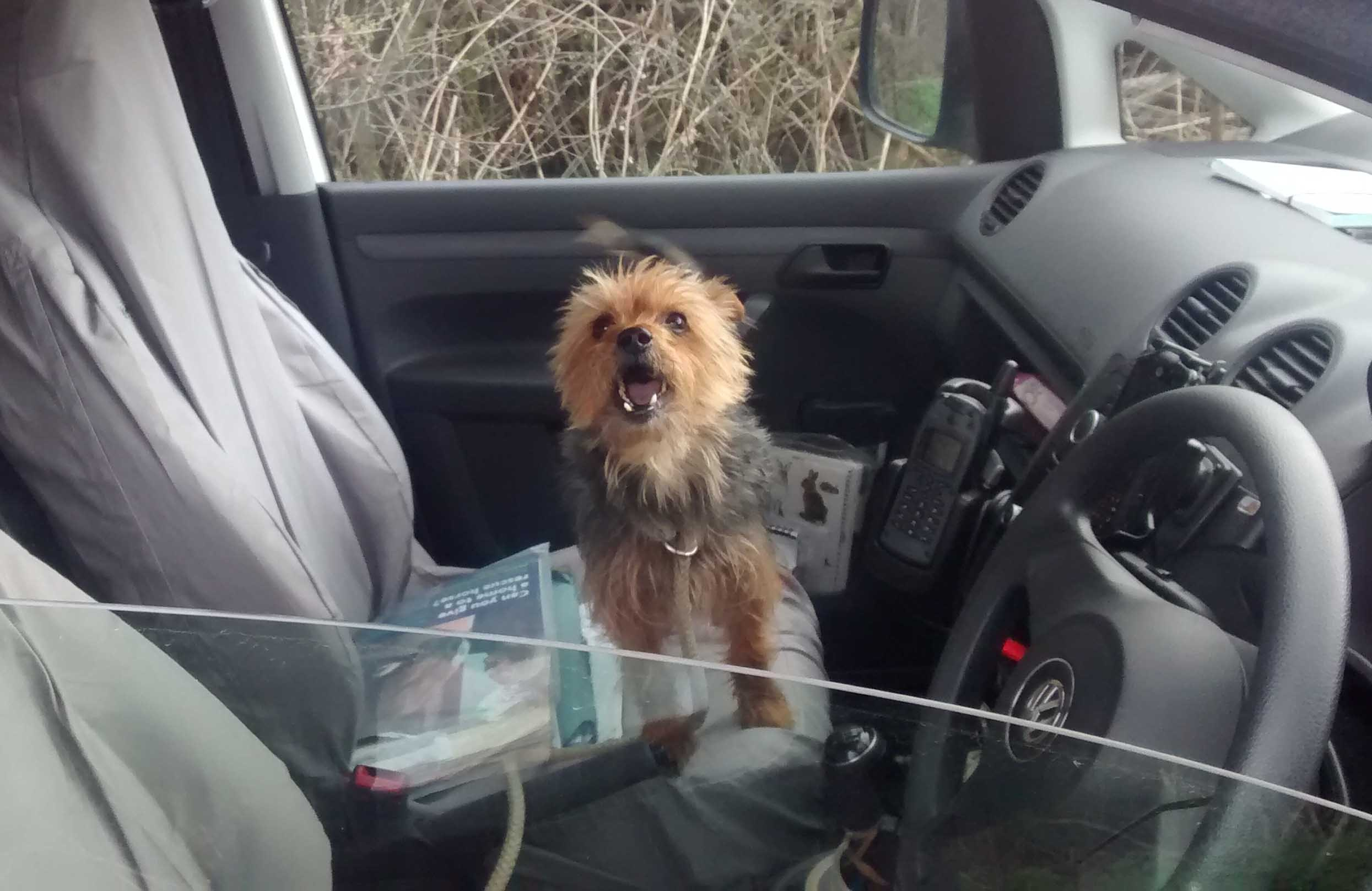BEST QUALITY AVAILABLEUndated handout photo issued by RSPCA of Alfie, a stolen dog dumped by callous thieves that engineered a rescue by flagging down a passing RSPCA van more than 100 miles from its home. PRESS ASSOCIATION Photo. Issue date: Wednesday April 8, 2015. Alfie the Yorkshire Terrier brought charity inspector Stephanie Law's van to a halt on a country road in Buckinghamshire, after dashing out of nearby woodland and into the middle of the lane, barking. Braking to a stop, Ms Law then opened her door only for Alfie to immediately jump inside. See PA story ANIMALS Rescue. Photo credit should read: RSPCA/PA WireNOTE TO EDITORS: This handout photo may only be used in for editorial reporting purposes for the contemporaneous illustration of events, things or the people in the image or facts mentioned in the caption. Reuse of the picture may require further permission from the copyright holder.