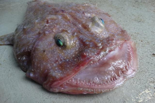 Weird Fish From The Deep 9
