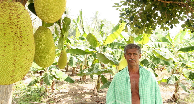 How Switching To Agroforestry Made These Subsistence Farmers In Tamil Nadu's Puddokotai District Prosperous