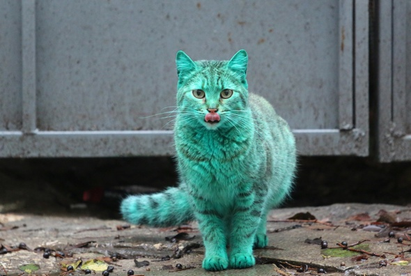 Mystery of bright green cat at seaside resort