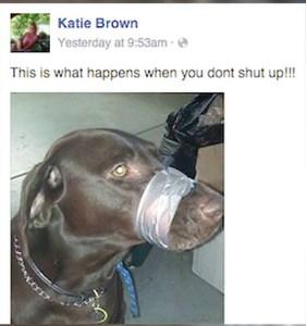 dog muzzle duct tape
