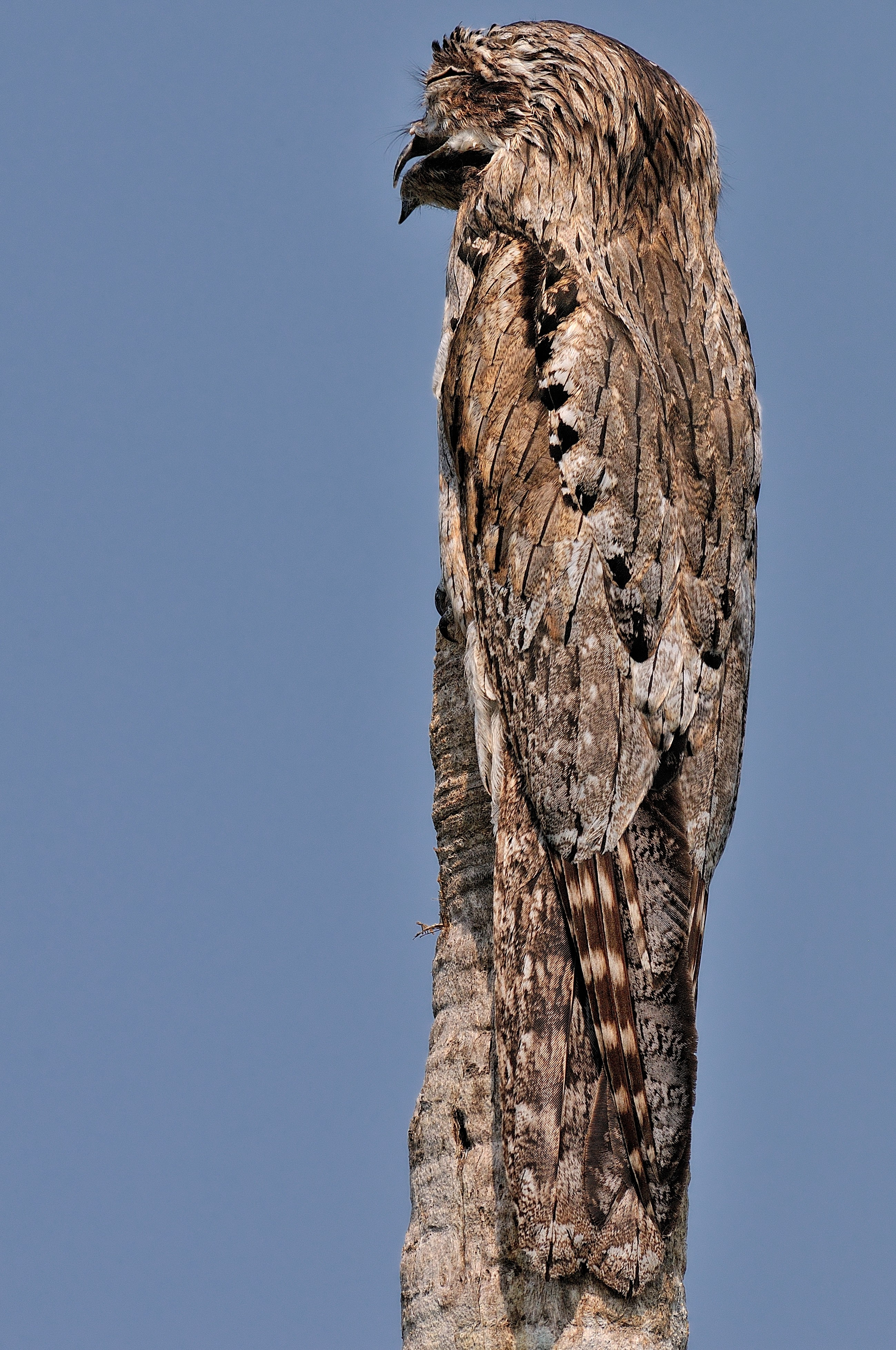 Can you spot the owl hiding in these pictures?