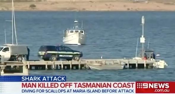 Man killed in great white shark attack in Tasmania