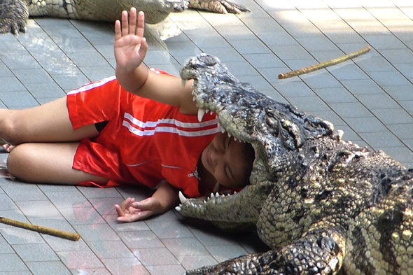 Zookeepers risk lives by putting heads in crocodiles' mouths