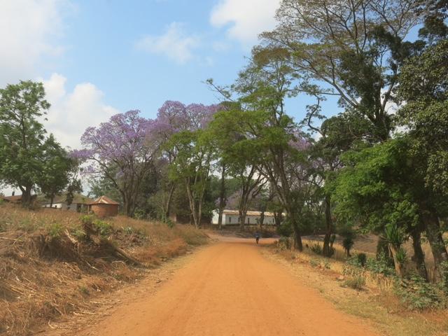 Une petite route de terre reliant Ntchisi à la seule route asphaltée entre Lilongwe et le nord du