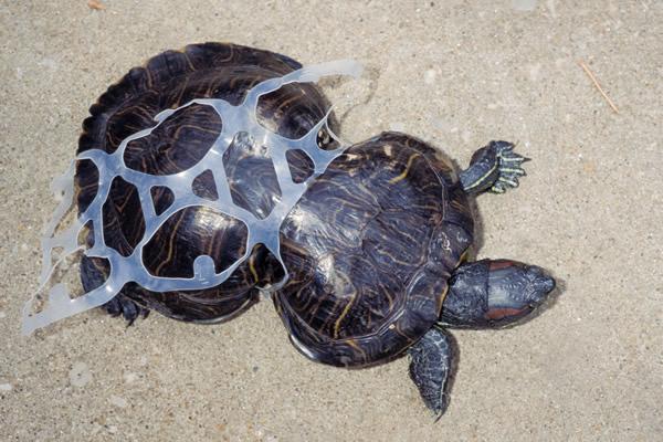 Los impactantes casos de animales afectados por la basura que debemos
