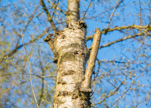 Can you spot the owl in this tree?