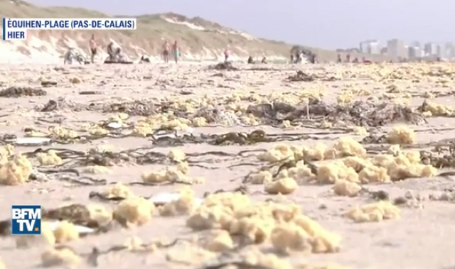What are they? Mysterious yellow blobs washing up on French beaches
