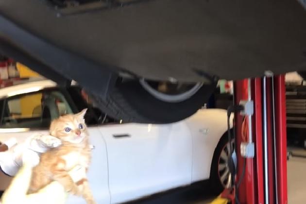 【ビデオ】テスラ「モデルX」のバンパー内に閉じ込められた子猫を救出!