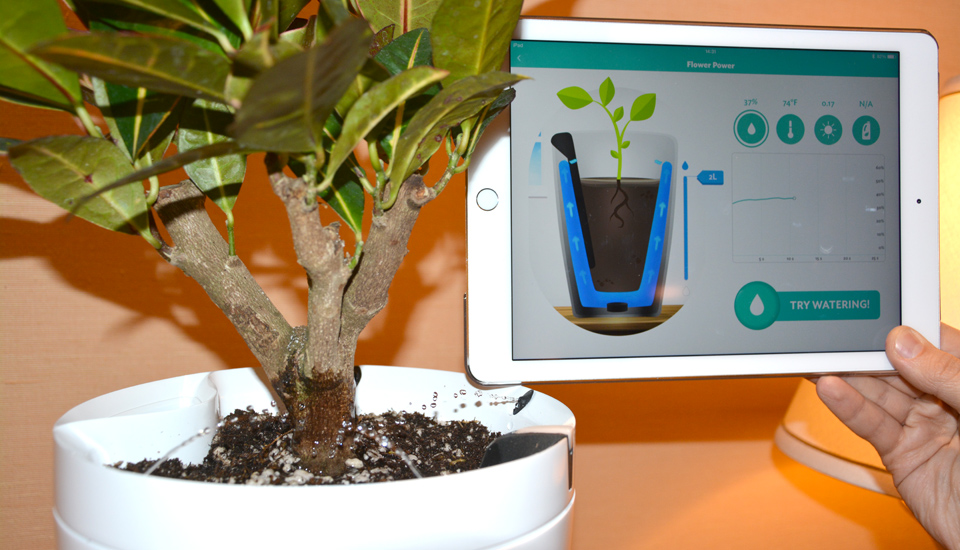 parrot pot container and mobile application