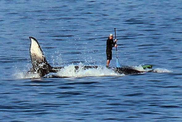 British tourist captures amazing pictures of paddle boarder 'surfing on whale'